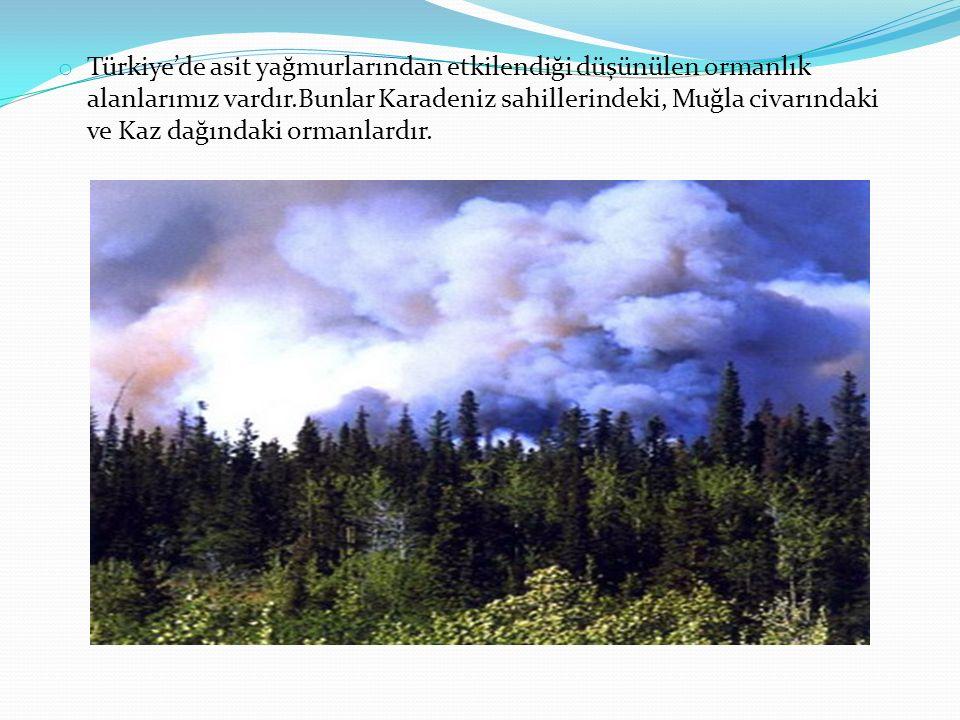 Türkiye'de asit yağmurlarından etkilendiği düşünülen ormanlık alanlarımız vardır.Bunlar Karadeniz sahillerindeki, Muğla civarındaki ve Kaz dağındaki ormanlardır.