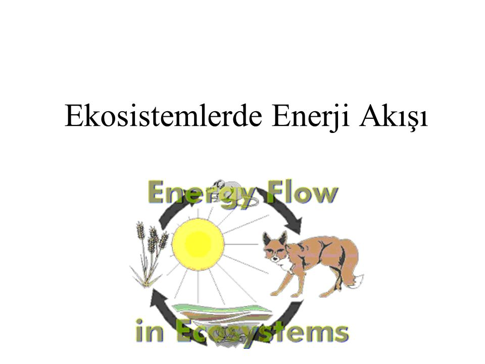 Ekosistemlerde Enerji Akışı