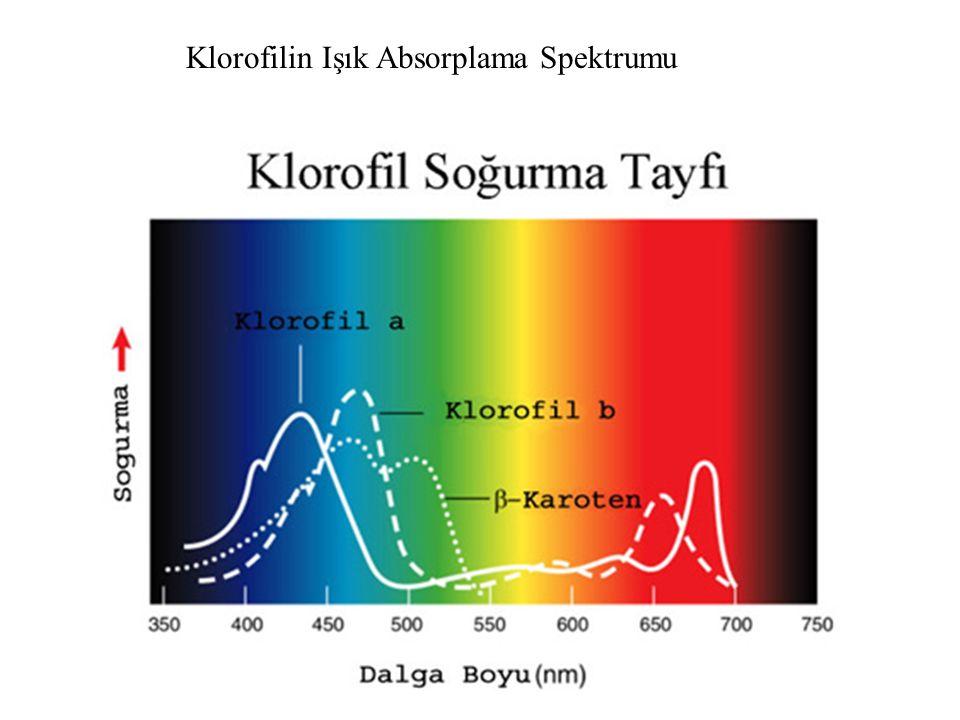 Klorofilin Işık Absorplama Spektrumu