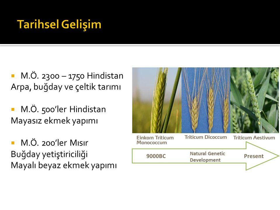 Tarihsel Gelişim M.Ö. 2300 – 1750 Hindistan