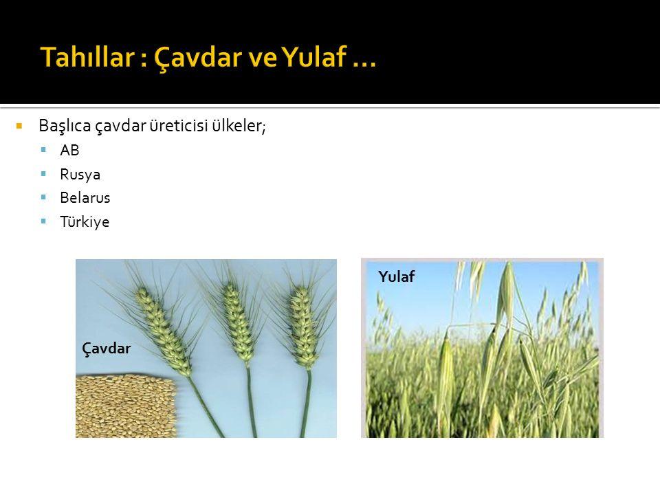 Tahıllar : Çavdar ve Yulaf …
