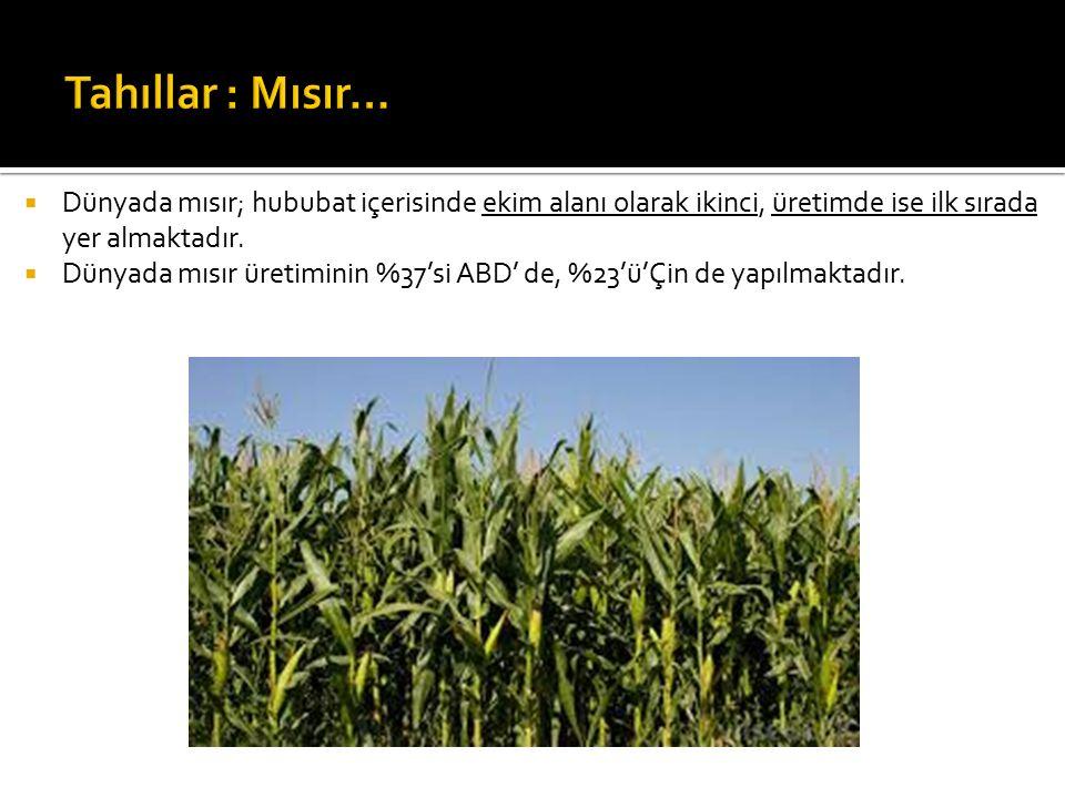 Tahıllar : Mısır… Dünyada mısır; hububat içerisinde ekim alanı olarak ikinci, üretimde ise ilk sırada yer almaktadır.