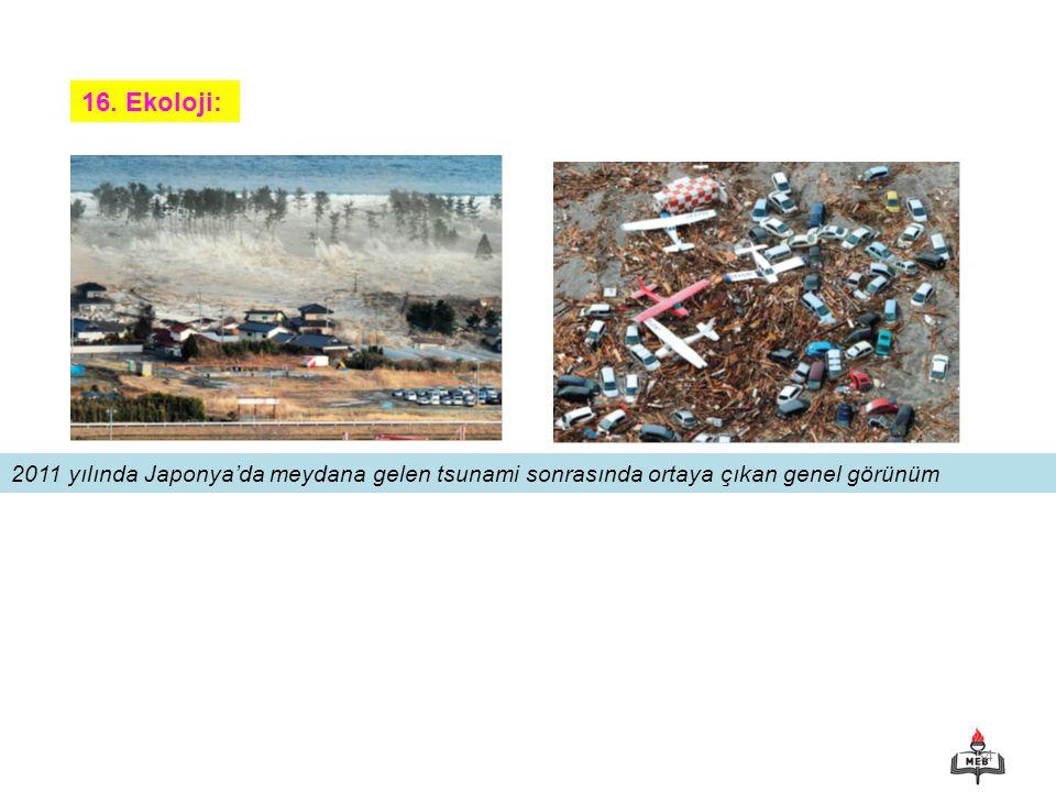 16. Ekoloji: 2011 yılında Japonya'da meydana gelen tsunami sonrasında ortaya çıkan genel görünüm