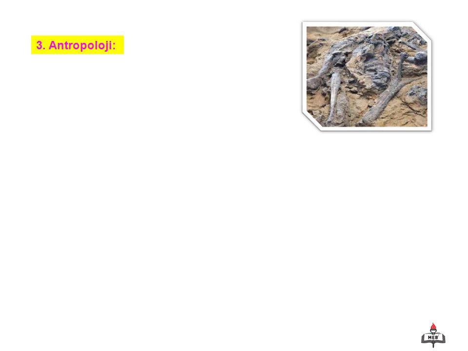 3. Antropoloji: