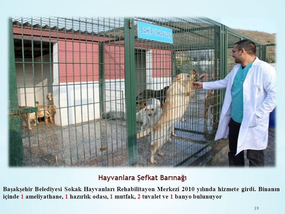 Hayvanlara Şefkat Barınağı
