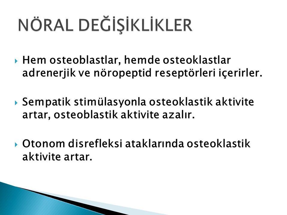 NÖRAL DEĞİŞİKLİKLER Hem osteoblastlar, hemde osteoklastlar adrenerjik ve nöropeptid reseptörleri içerirler.