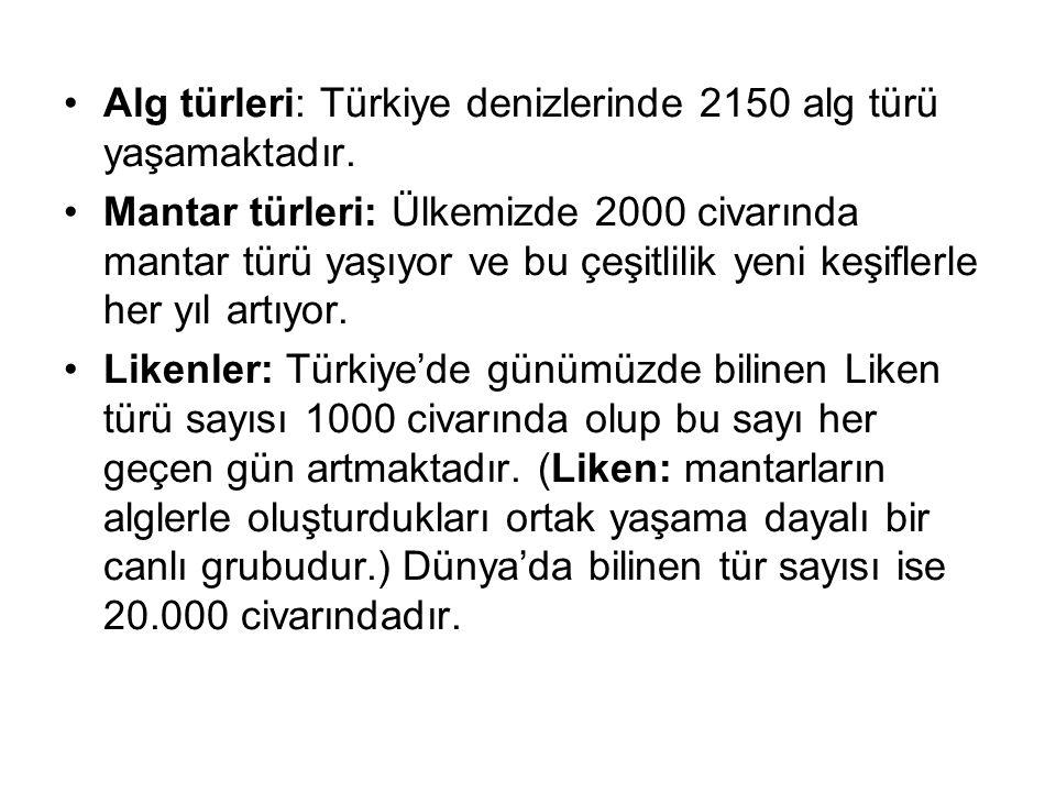 Alg türleri: Türkiye denizlerinde 2150 alg türü yaşamaktadır.