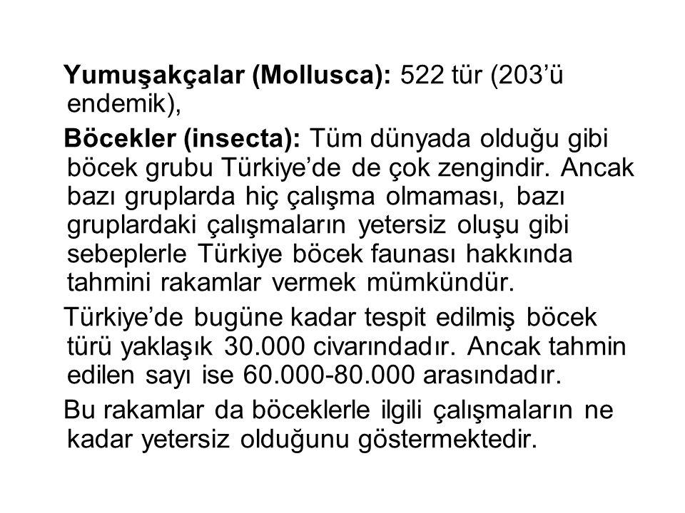 Yumuşakçalar (Mollusca): 522 tür (203'ü endemik),