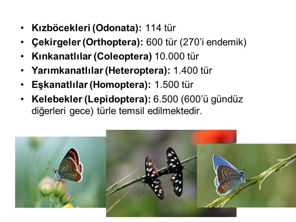 Kızböcekleri (Odonata): 114 tür