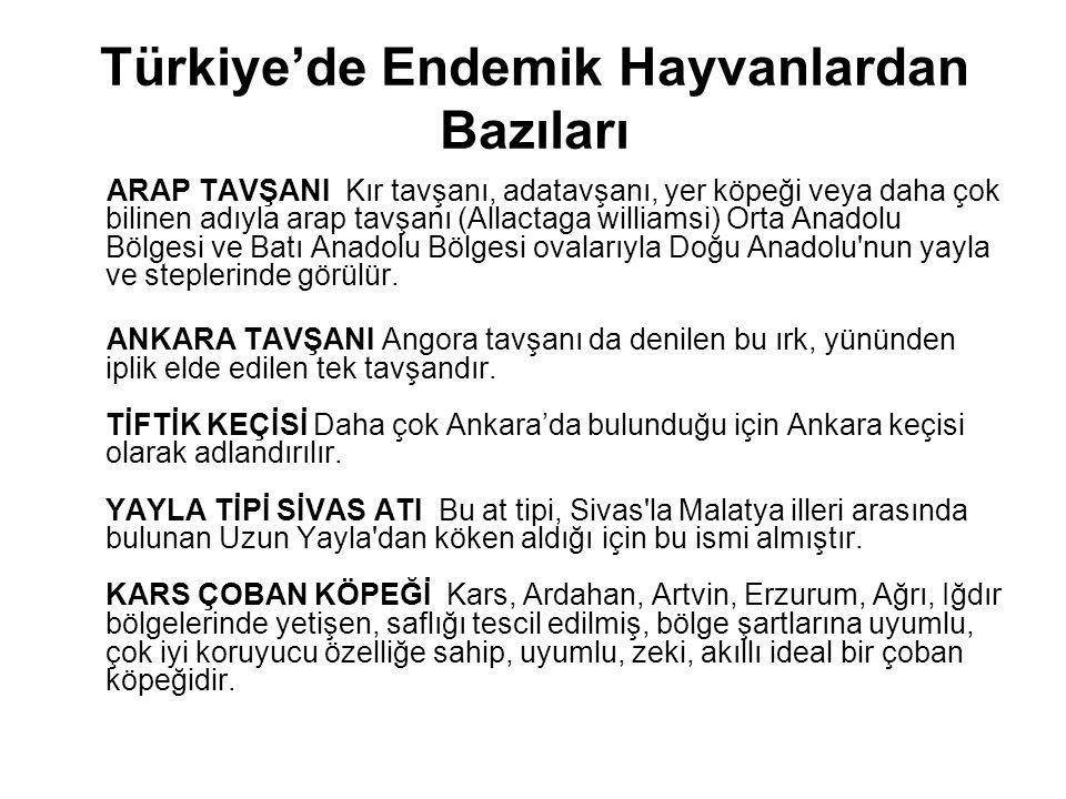 Türkiye'de Endemik Hayvanlardan Bazıları
