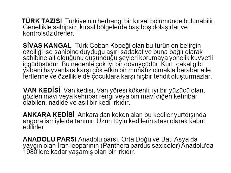 TÜRK TAZISI Türkiye nin herhangi bir kırsal bölümünde bulunabilir