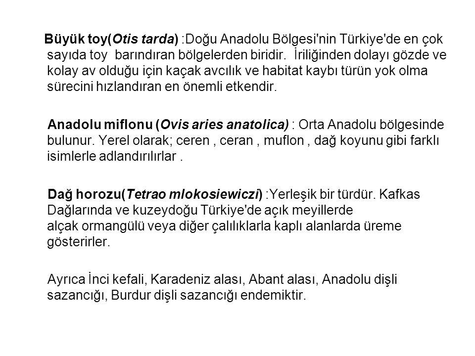 Büyük toy(Otis tarda) :Doğu Anadolu Bölgesi nin Türkiye de en çok sayıda toy barındıran bölgelerden biridir. İriliğinden dolayı gözde ve kolay av olduğu için kaçak avcılık ve habitat kaybı türün yok olma sürecini hızlandıran en önemli etkendir.
