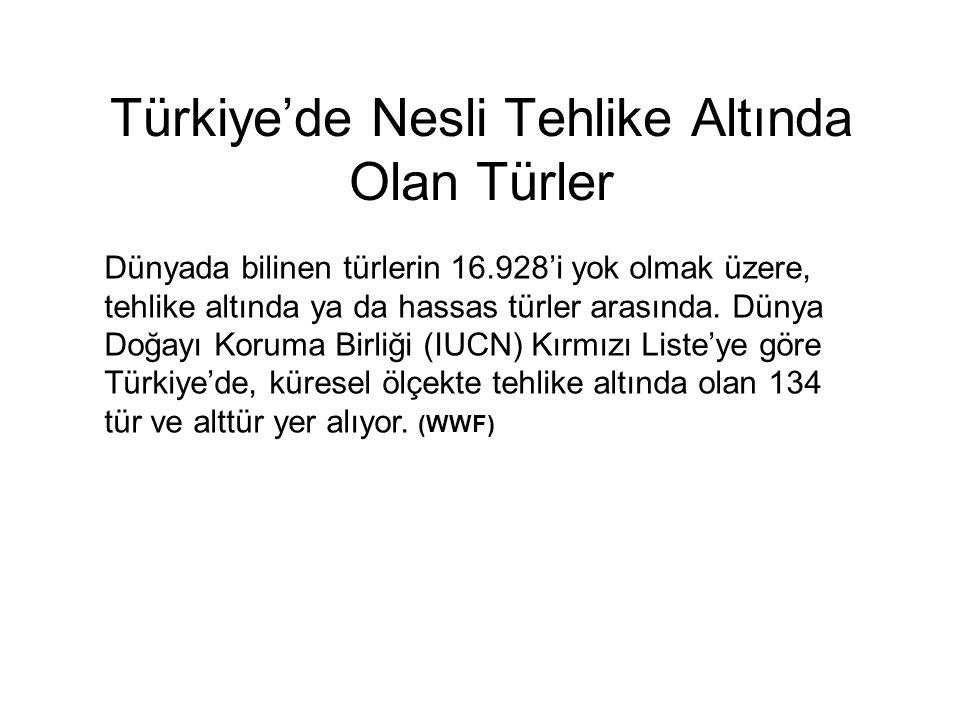 Türkiye'de Nesli Tehlike Altında Olan Türler
