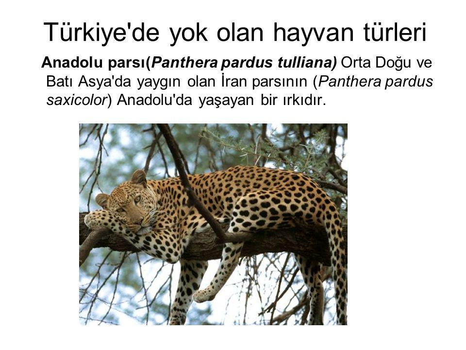 Türkiye de yok olan hayvan türleri