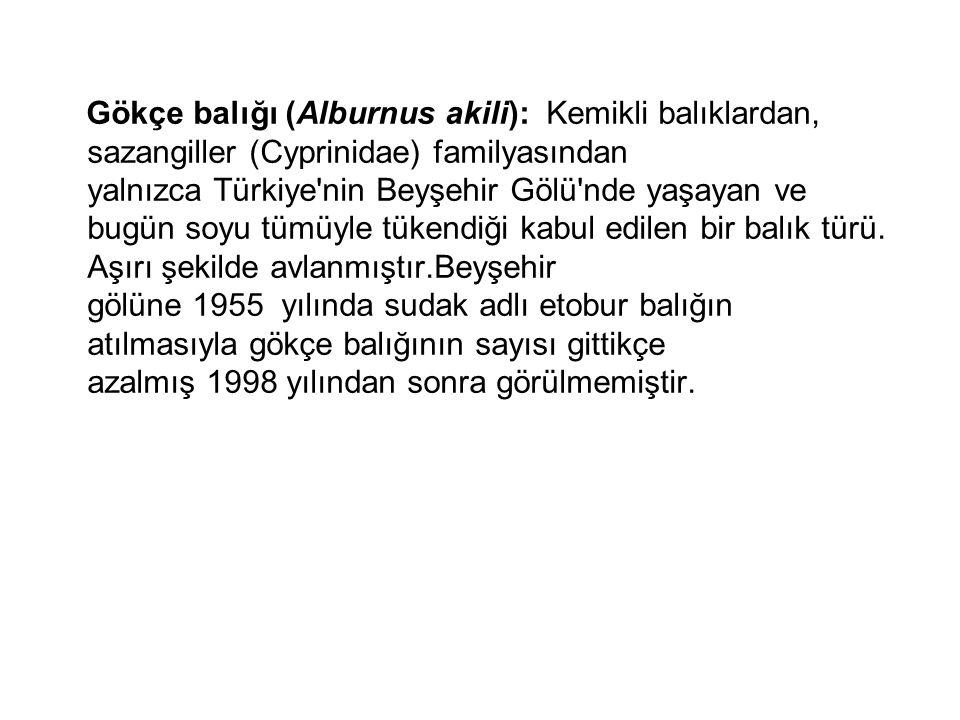 Gökçe balığı (Alburnus akili): Kemikli balıklardan, sazangiller (Cyprinidae) familyasından yalnızca Türkiye nin Beyşehir Gölü nde yaşayan ve bugün soyu tümüyle tükendiği kabul edilen bir balık türü.