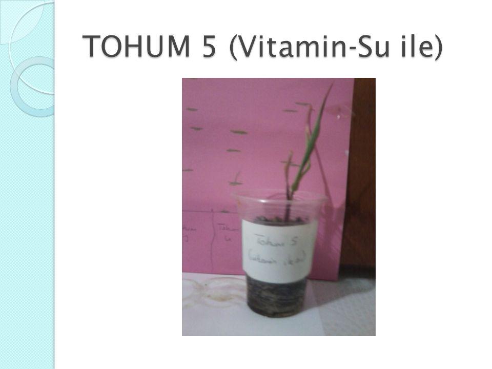 TOHUM 5 (Vitamin-Su ile)