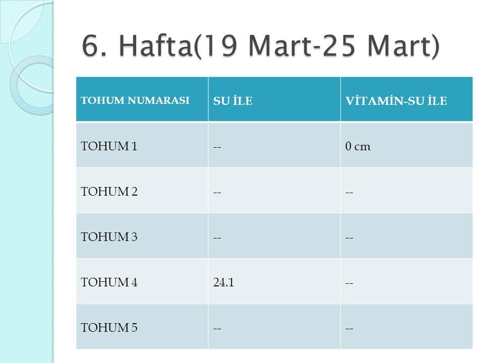 6. Hafta(19 Mart-25 Mart) SU İLE VİTAMİN-SU İLE TOHUM 1 -- 0 cm