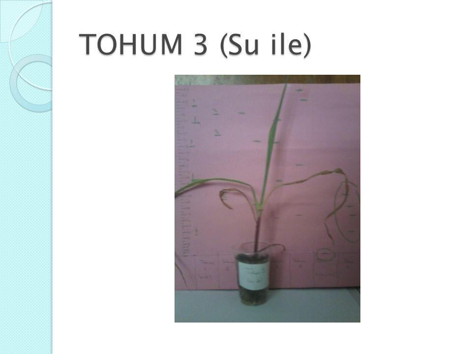 TOHUM 3 (Su ile)