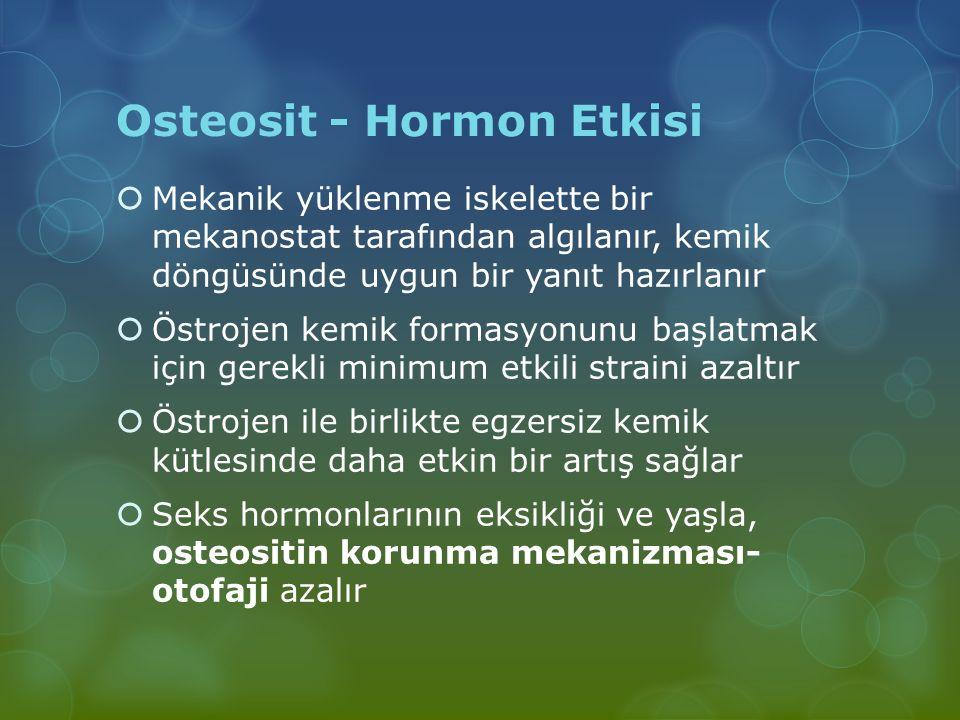 Osteosit - Hormon Etkisi