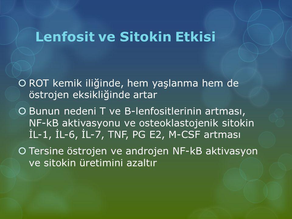 Lenfosit ve Sitokin Etkisi