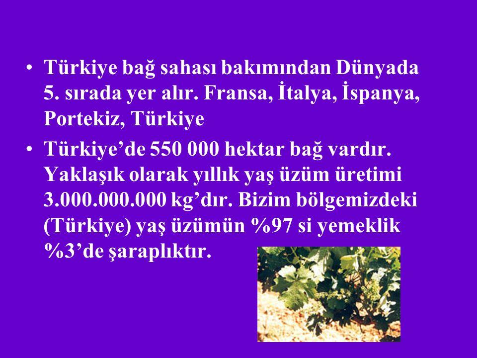 Türkiye bağ sahası bakımından Dünyada 5. sırada yer alır
