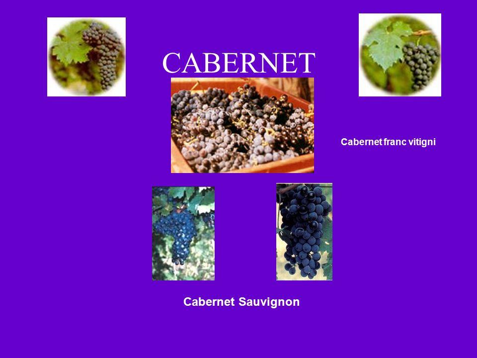 CABERNET Cabernet franc vitigni Cabernet Sauvignon