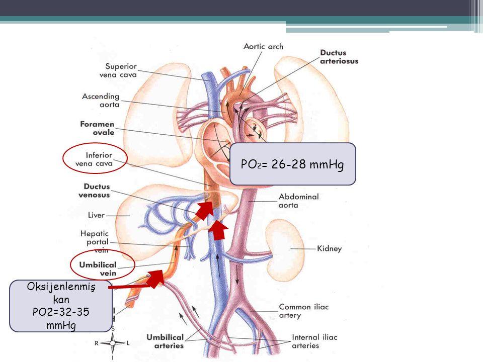PO2= 26-28 mmHg Oksijenlenmiş kan PO2=32-35 mmHg