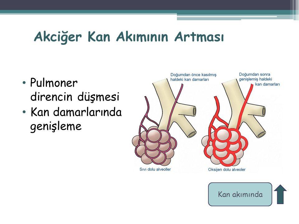 Akciğer Kan Akımının Artması