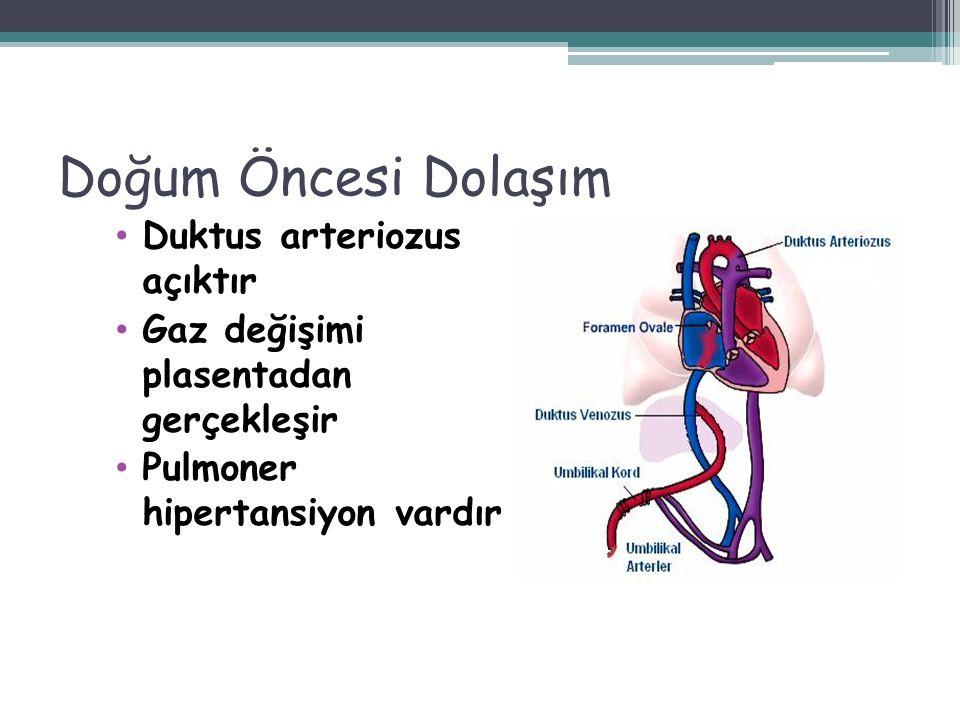 Doğum Öncesi Dolaşım Duktus arteriozus açıktır