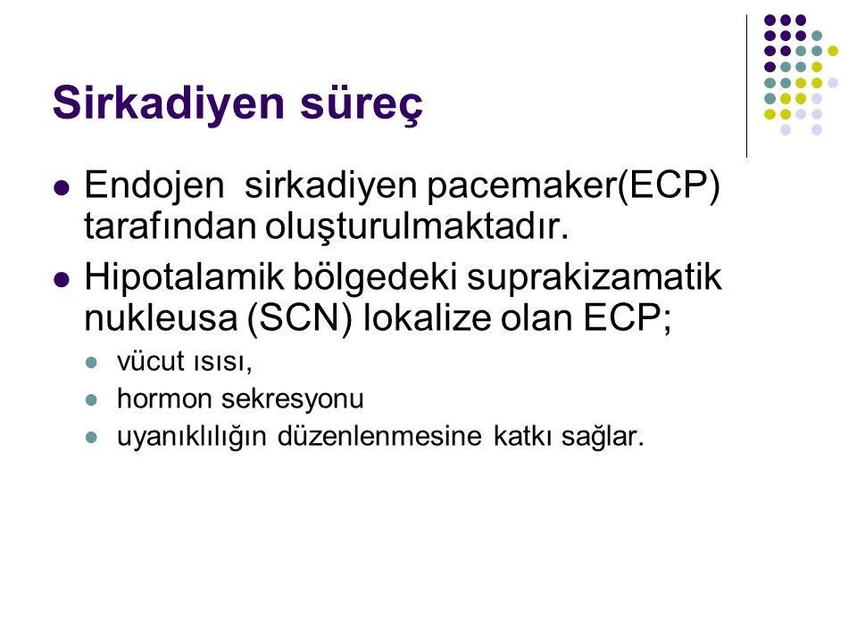 Sirkadiyen süreç Endojen sirkadiyen pacemaker(ECP) tarafından oluşturulmaktadır.
