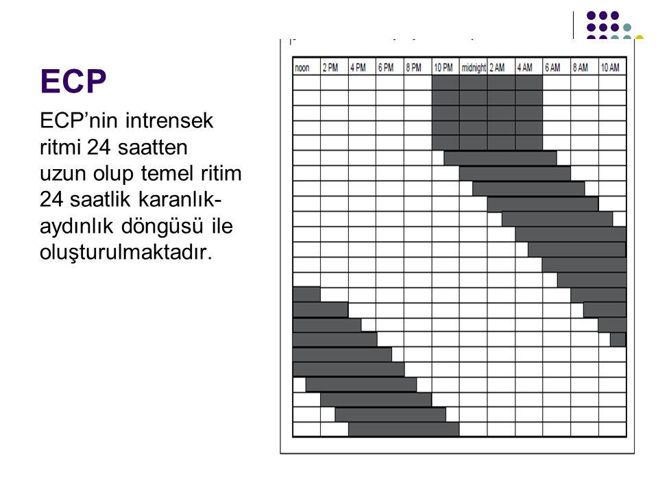 ECP ECP'nin intrensek ritmi 24 saatten uzun olup temel ritim 24 saatlik karanlık-aydınlık döngüsü ile oluşturulmaktadır.
