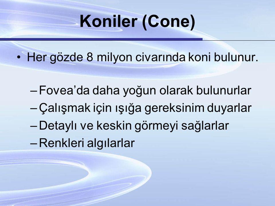 Koniler (Cone) Her gözde 8 milyon civarında koni bulunur.
