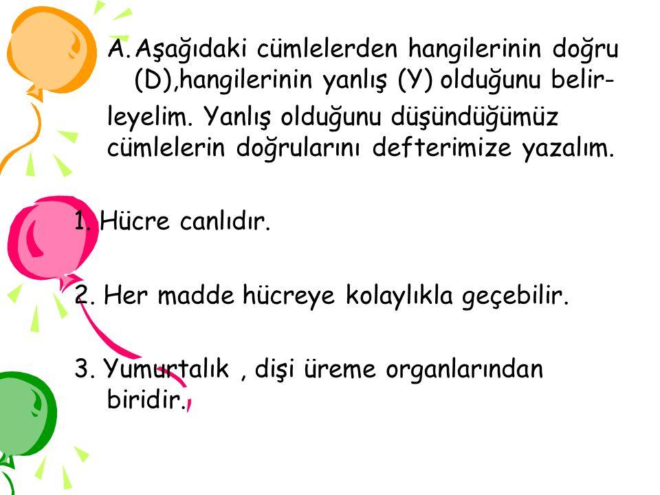 Aşağıdaki cümlelerden hangilerinin doğru (D),hangilerinin yanlış (Y) olduğunu belir-