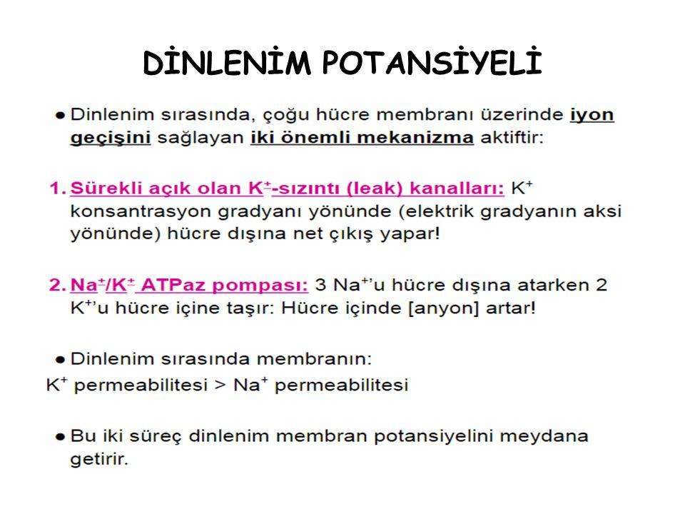 DİNLENİM POTANSİYELİ