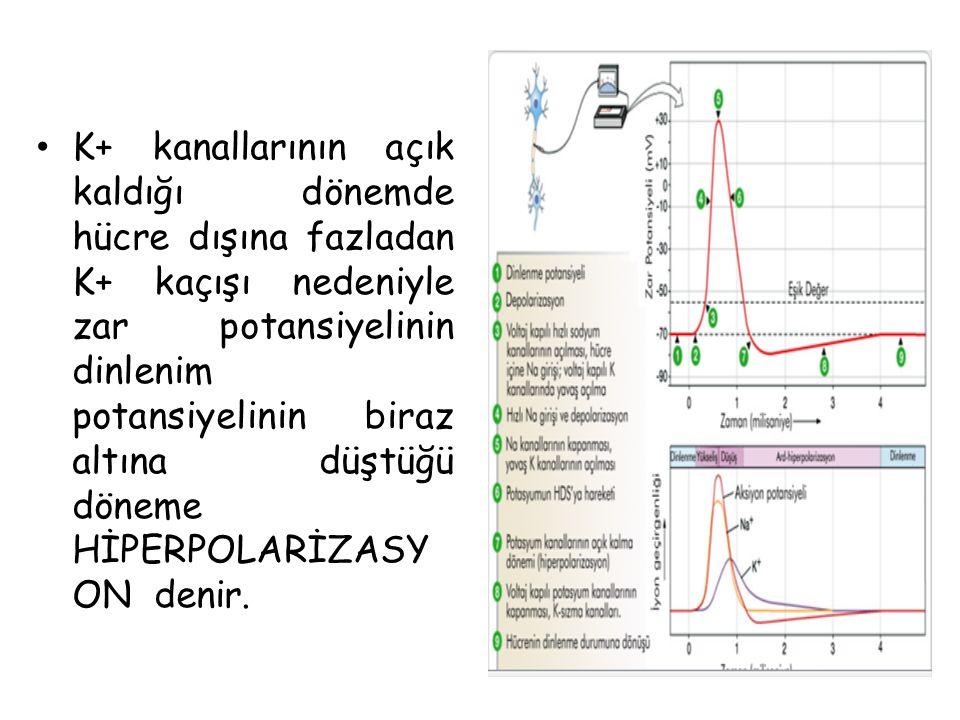 K+ kanallarının açık kaldığı dönemde hücre dışına fazladan K+ kaçışı nedeniyle zar potansiyelinin dinlenim potansiyelinin biraz altına düştüğü döneme HİPERPOLARİZASYON denir.