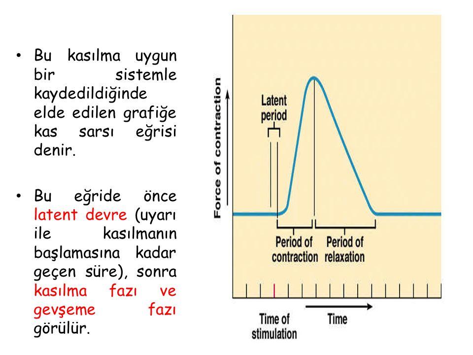 Bu kasılma uygun bir sistemle kaydedildiğinde elde edilen grafiğe kas sarsı eğrisi denir.
