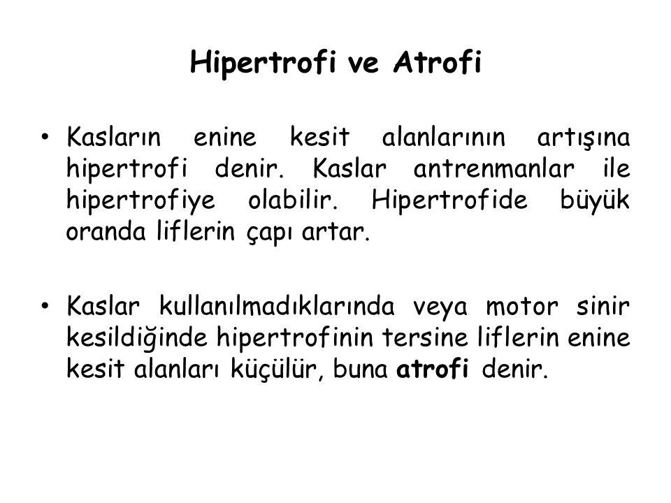 Hipertrofi ve Atrofi