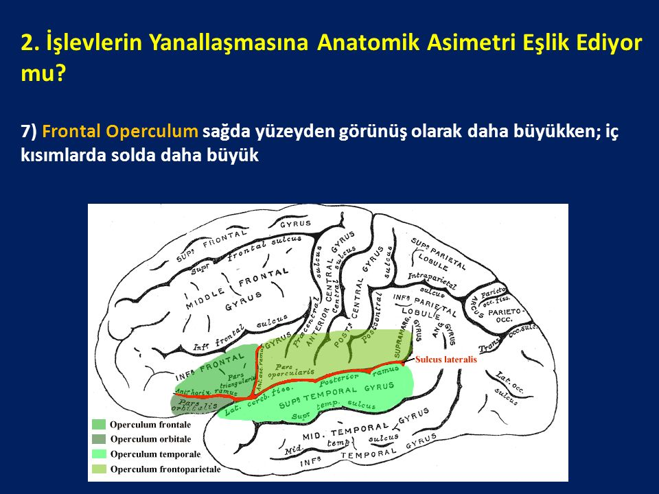 2. İşlevlerin Yanallaşmasına Anatomik Asimetri Eşlik Ediyor mu