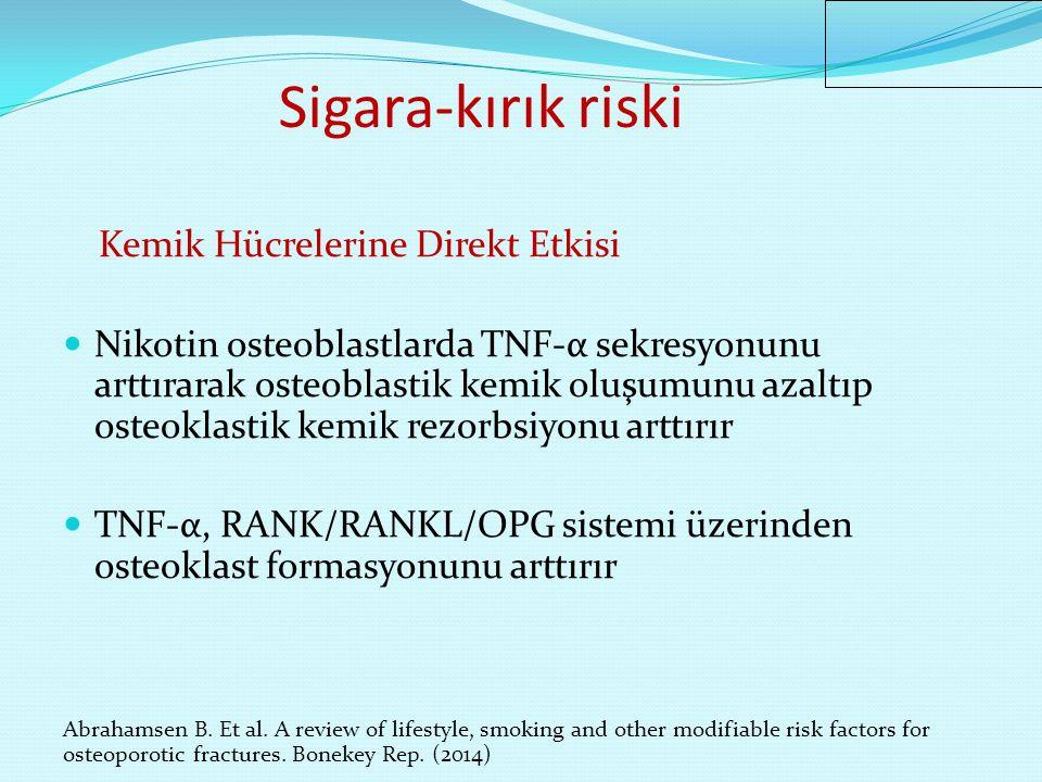 Sigara-kırık riski Kemik Hücrelerine Direkt Etkisi