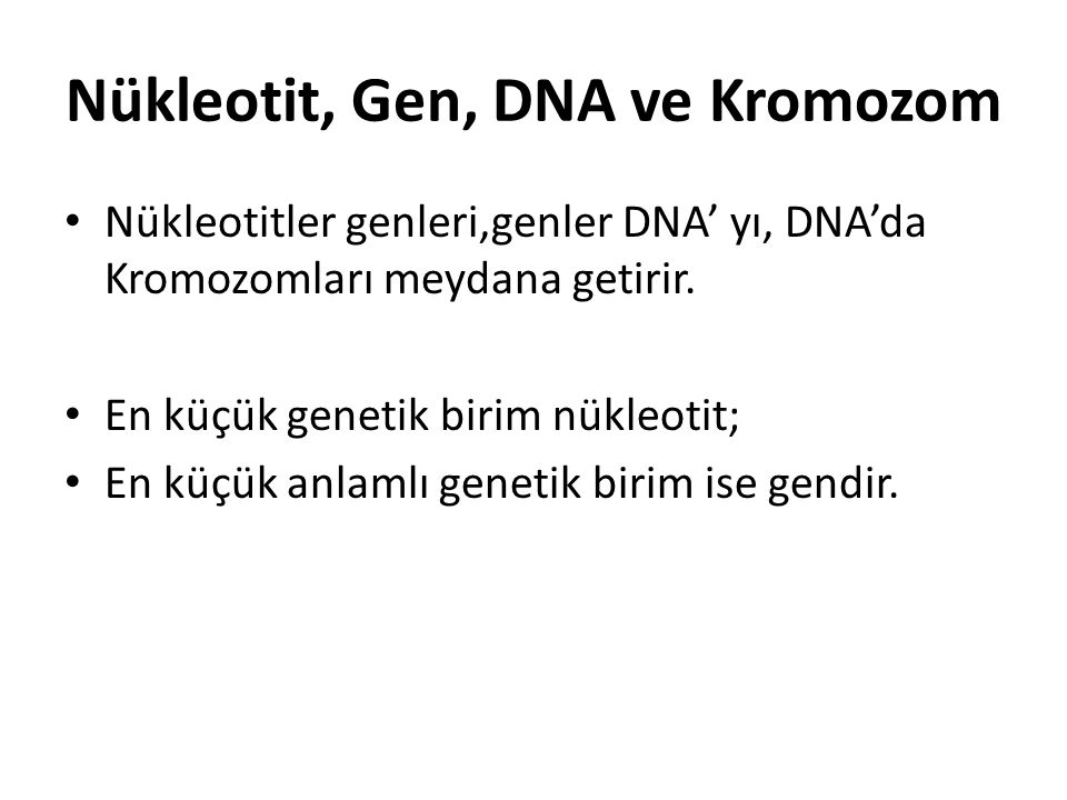 Nükleotit, Gen, DNA ve Kromozom