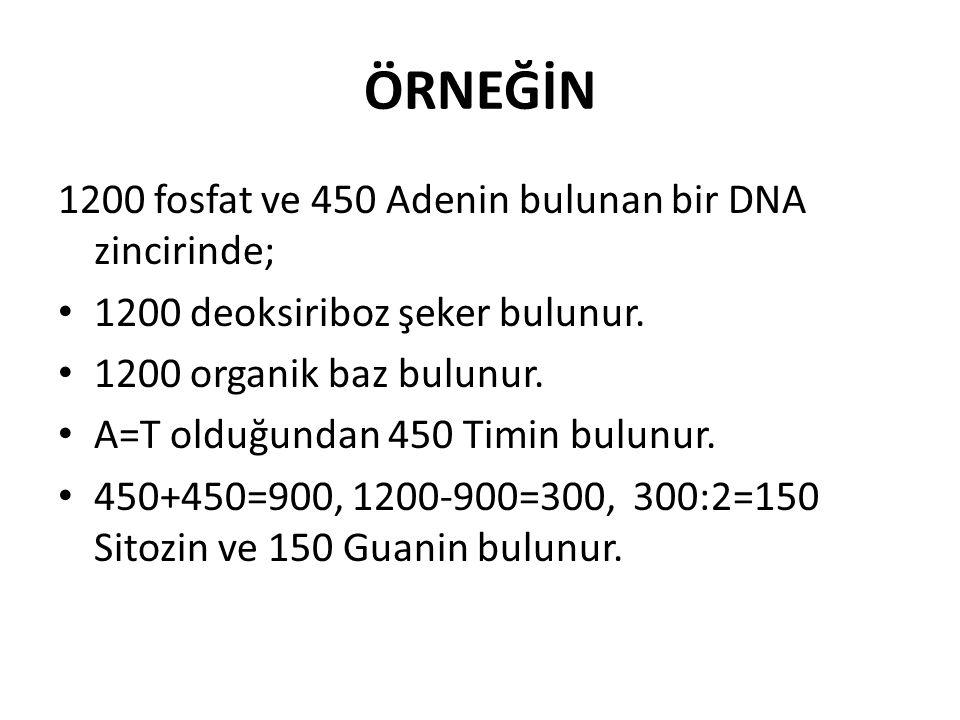 ÖRNEĞİN 1200 fosfat ve 450 Adenin bulunan bir DNA zincirinde;