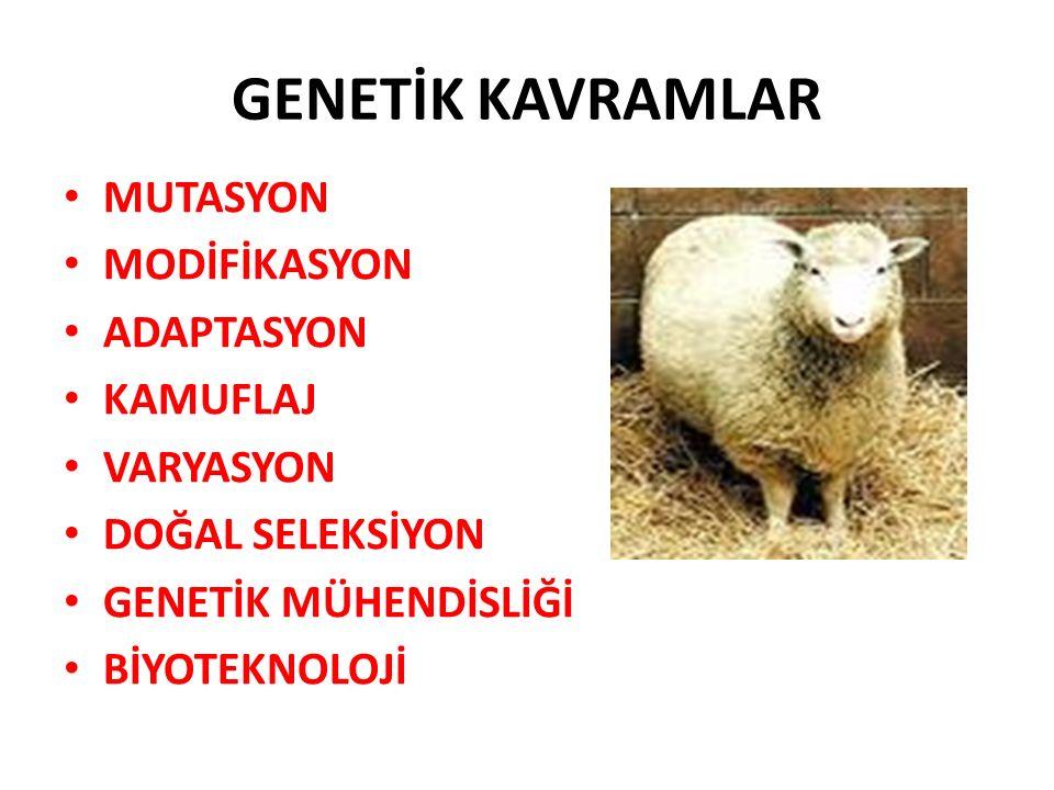 GENETİK KAVRAMLAR MUTASYON MODİFİKASYON ADAPTASYON KAMUFLAJ VARYASYON