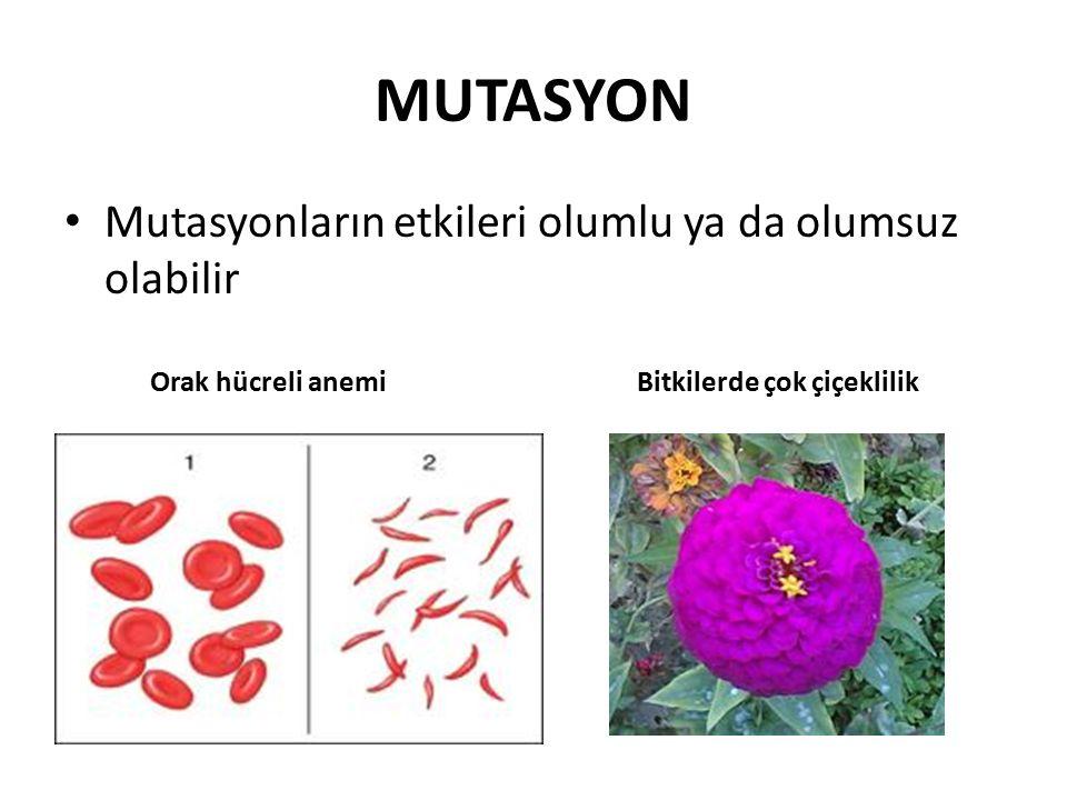MUTASYON Mutasyonların etkileri olumlu ya da olumsuz olabilir