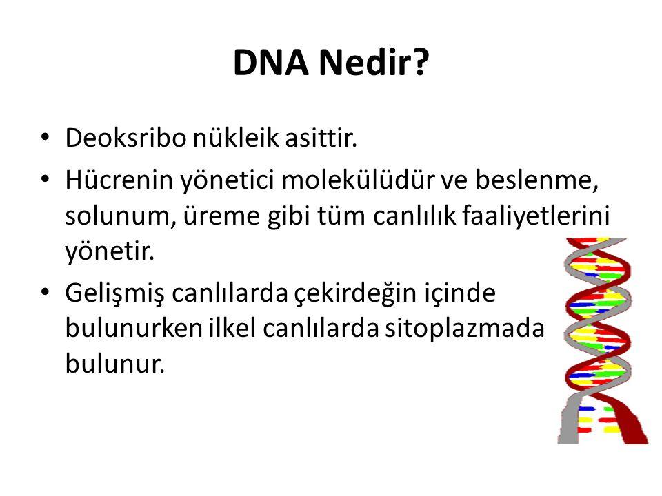 DNA Nedir Deoksribo nükleik asittir.