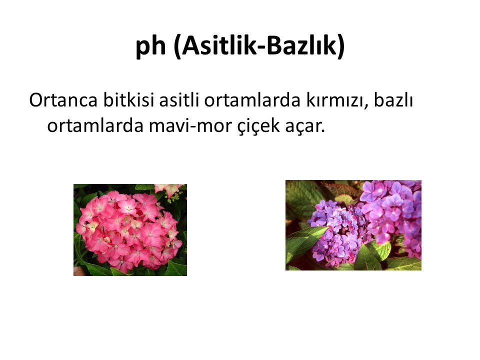 ph (Asitlik-Bazlık) Ortanca bitkisi asitli ortamlarda kırmızı, bazlı ortamlarda mavi-mor çiçek açar.
