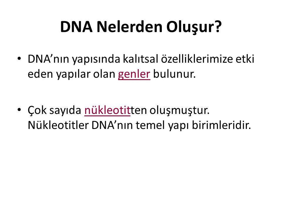 DNA Nelerden Oluşur DNA'nın yapısında kalıtsal özelliklerimize etki eden yapılar olan genler bulunur.