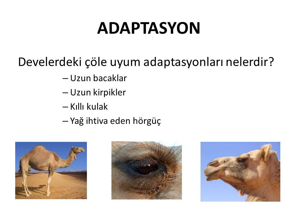 ADAPTASYON Develerdeki çöle uyum adaptasyonları nelerdir