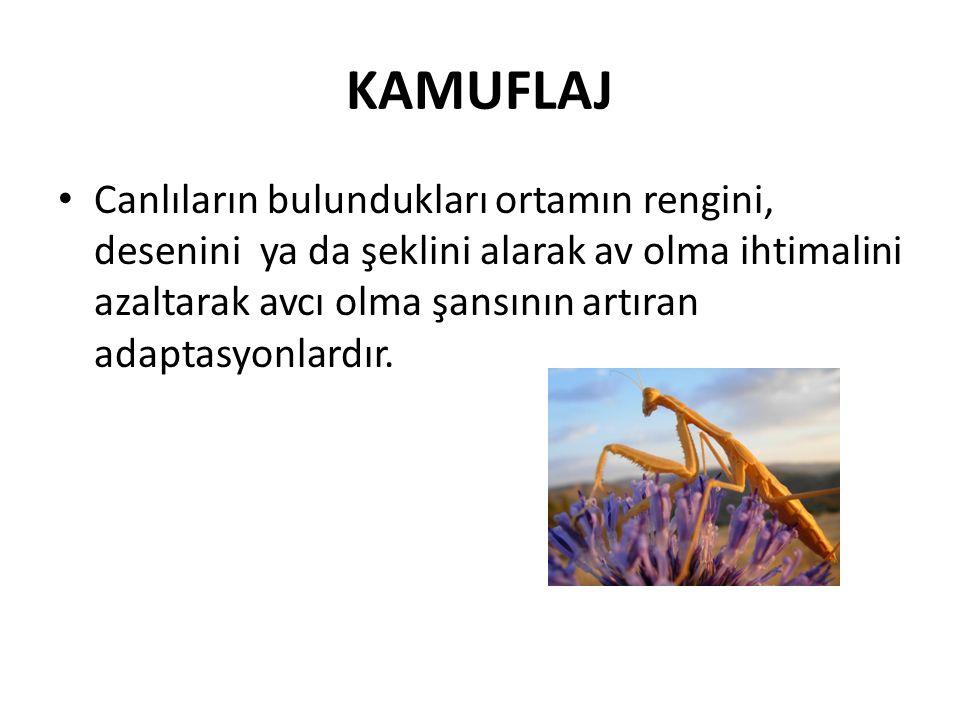 KAMUFLAJ