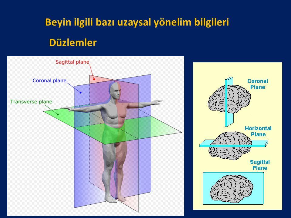 Beyin ilgili bazı uzaysal yönelim bilgileri