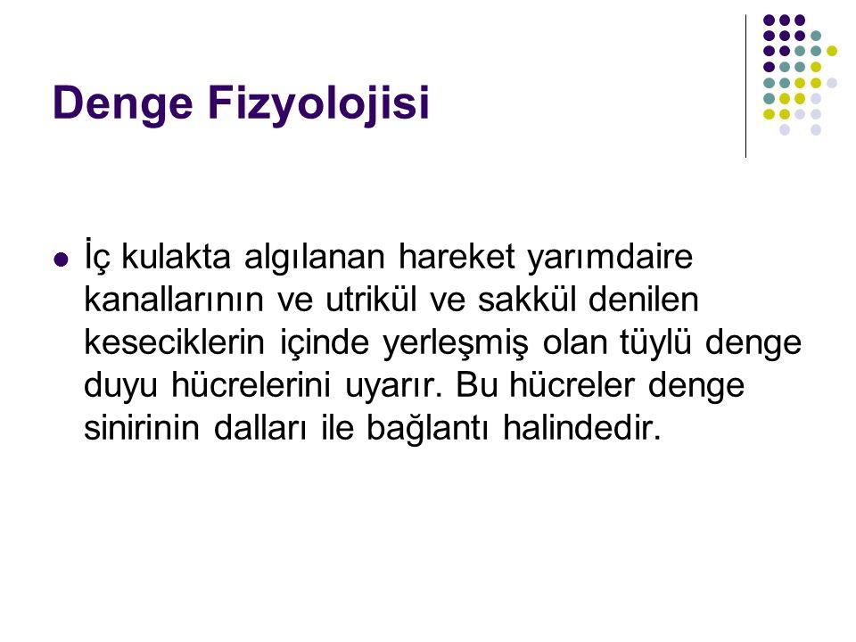 Denge Fizyolojisi
